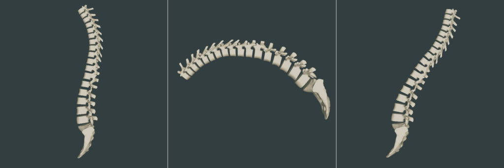 spine-3d
